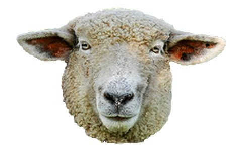 Sheep Home Decor steaua sheep png photo by desvai photobucket