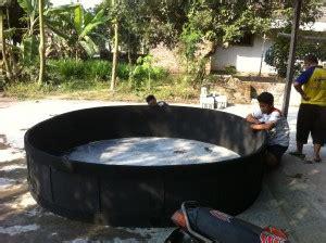 Fermentasi Pakan Ternak Ayam Pedaging ternak sapi bandung ternak ayam philipin