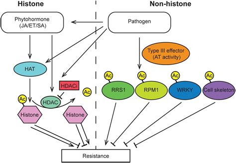 r proteins plants frontiers dynamic protein acetylation in plant pathogen