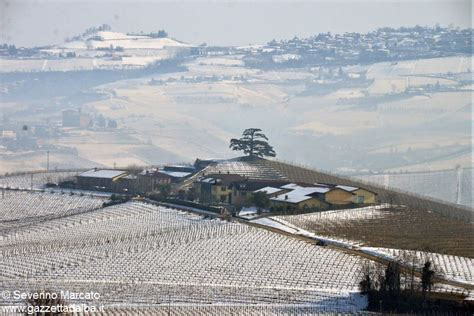 costituire una banca alberi monumentali il lavoro di italia nostra costituisce
