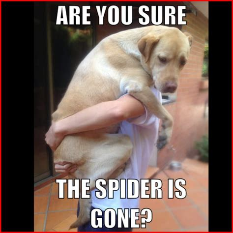 Labrador Meme - labrador meme 28 images labrador meme labrador memes