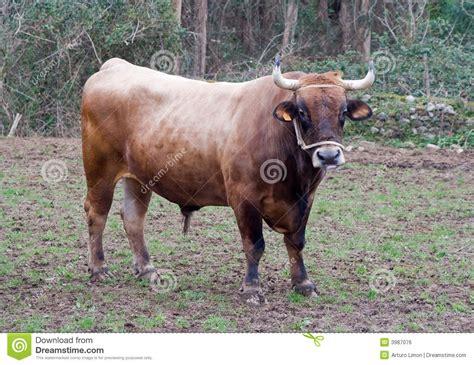 imagenes reflexivas de niños os stock foto afbeelding bestaande uit rundvlees