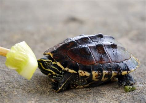 how often do newborn puppies eat what do baby turtles eat lovetoknow
