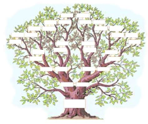 arbre genealogique l arbre g 233 n 233 alogique exercice family trees genealogy