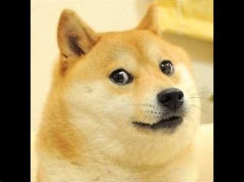 Doge Meme Shiba - doge is shiba youtube