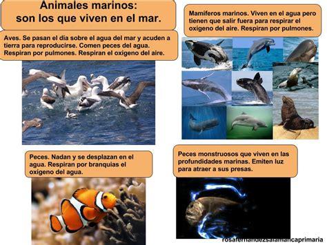 imagenes animales que viven en el mar maestra de primaria los animales y las plantas en la