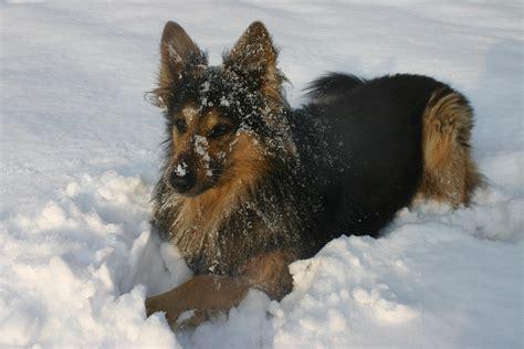 alimentazione x cani alimentazione in inverno la dieta per fido