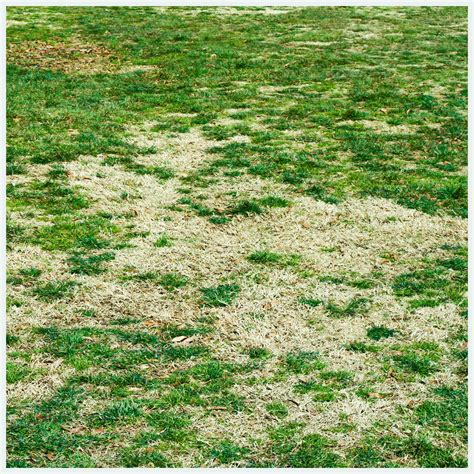 maryland grub control service suregreen lawn solutions