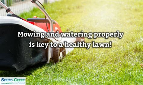 summer lawn care tips summer lawn care interesting lawn care infographic with summer lawn care fabulous fall lawn