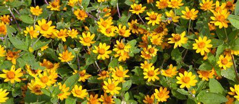 piante e fiori d italia cristiano genovali eletto presidente dell associazione