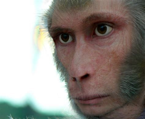 Home Design Software For Xp Pic Of The Day Ridiculously Believable Monkey Man My