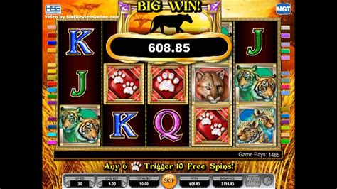 igt cats  slot machine game play youtube