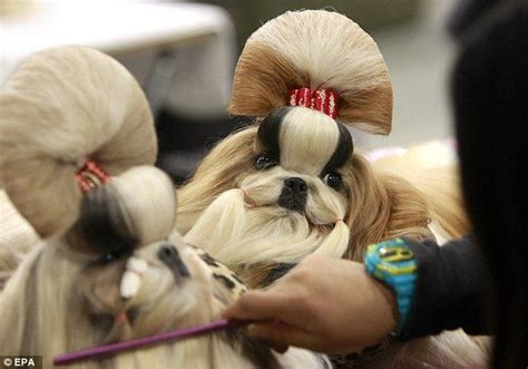 Komik Grooming Up 18 hair dos show and wallpaper pictures on