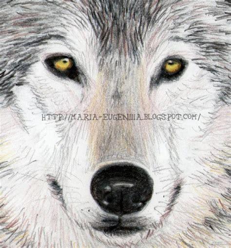 imagenes a lapiz de lobos eugeniiia mis dibujos dibujo de un lobo