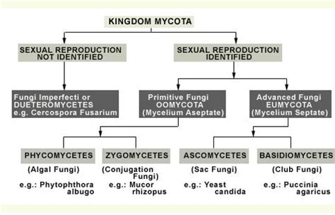 section 21 1 the kingdom fungi answer key describe various types of fungi on the basis of mode of