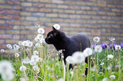 volevo un gatto nero testo volevo un gatto nero il testo della canzone dogalize