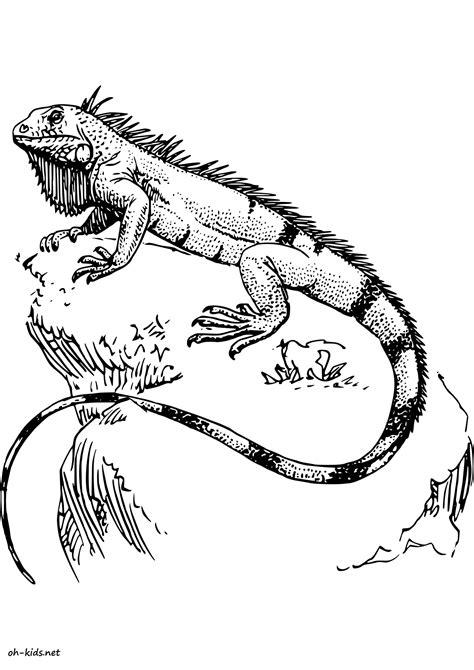 imagenes para pintar iguana coloriage iguane oh kids fr