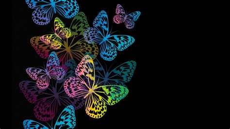 colorful butterflies colorful butterflies hd wallpaper background image