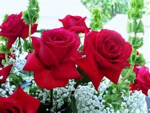 for emotions flowers garden love beauty romance rose spring life wallpaper