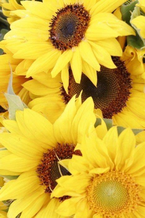 tra e fior nasce l fiori immagini significato