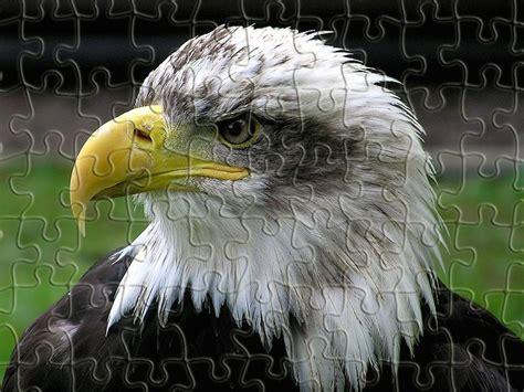 bald eagle jigsaw puzzle
