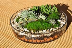 plant terrarium basics