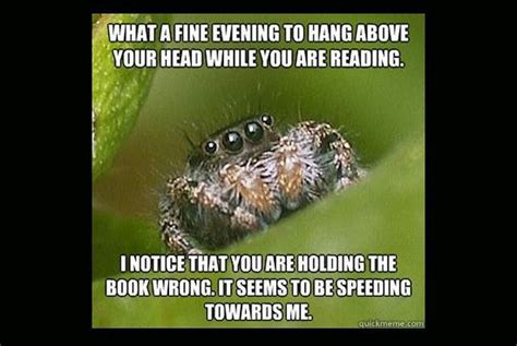 Sad Spider Meme - misunderstood spider meme fun