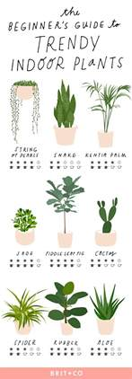 indoor plant design the beginner s guide to trendy indoor plants brit co