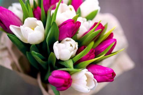 foto con fiori bellissimi non mimose 5 fiori bellissimi per le donne donnad