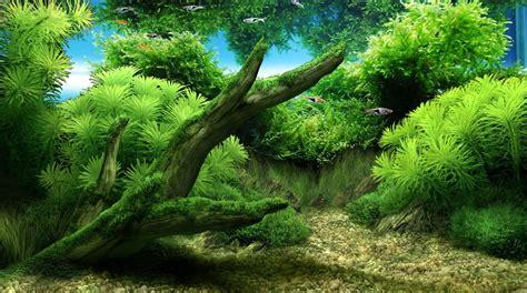 wallpaper pc aquarium bergerak wallpaper aquascape bergerak hd wallpapers blog