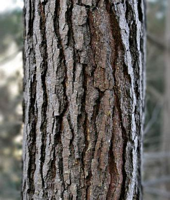 bark extension