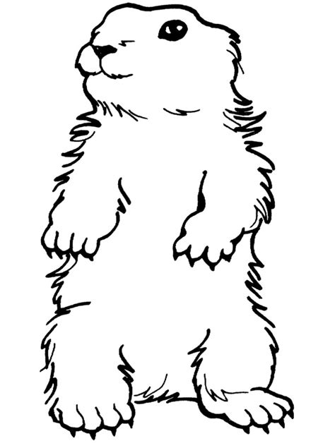 Cartoon Groundhog Pictures Cliparts Co Groundhog Coloring Page