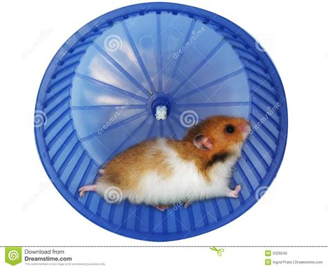 Wheels Exercise X8 Kincir Hamster Mencit hamster in a wheel stock photo image of play rolling 5329240