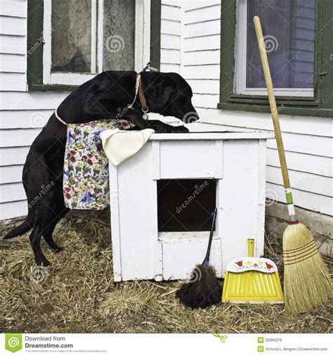dog cleans house dog spring cleaning the dog house royalty free stock image image 30366216