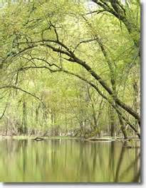 Which Feature Is Characteristic Of A Bottomland Hardwood Forest - ecology central region bottomland hardwood