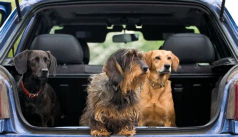 best cars for dogs the best car for dogs to travel dogalize