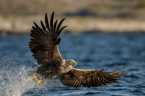 free pics eagle hd wallpapers free eagle hd pictures hd