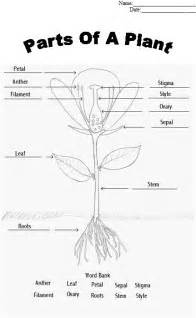 Galerry flower structure coloring worksheet