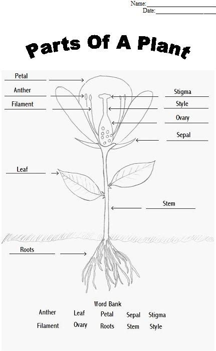 coloring page parts of a flower parts of a flower coloring page vitlt com