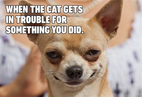 hilarious dog memes youll laugh   time readers