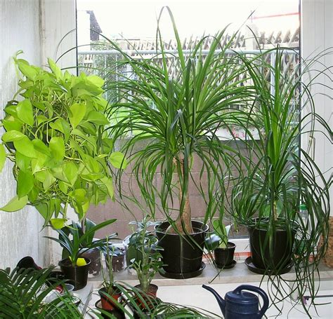 pflanzen schlafzimmer bei zimmerpflanzen aufs bio siegel achten