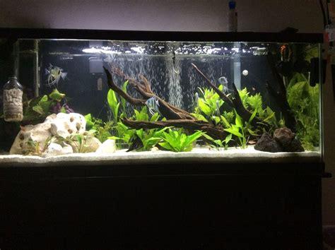 lighting for 55 gallon planted tank jmax183 s planted tanks photo id 41983 version