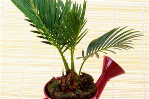 woran kann es liegen wenn die hupe nicht funktioniert palme w 228 chst nicht 187 woran kann s liegen