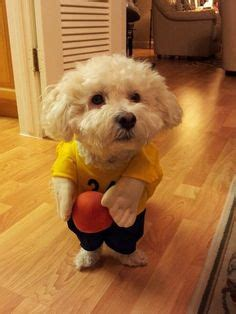 25 pet halloween costumes that are so cute we cant even pet halloween costumes on pinterest dog costumes dog