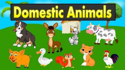 domestic animals names  kids farm animals youtube kidteentv youtube