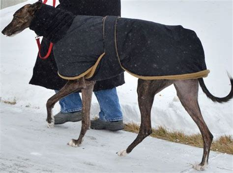 pattern for greyhound dog coat snow angel winter coat with black waterproof breathable
