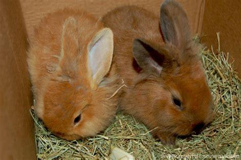 Baby Rabbit Id 原创 世界新闻与图片 猫眼看人 凯迪社区