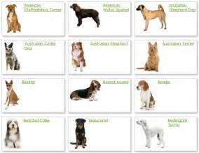 types of dogs all list of different dogs breeds dog breeds list with