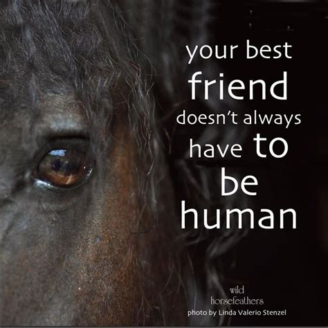 78 images about great horse quotes group board on
