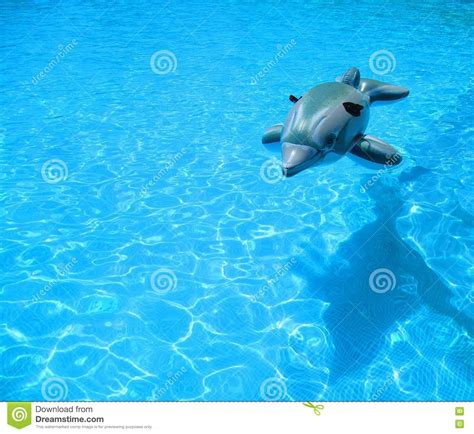 inflatable dolphin on blue swimming pool royalty free